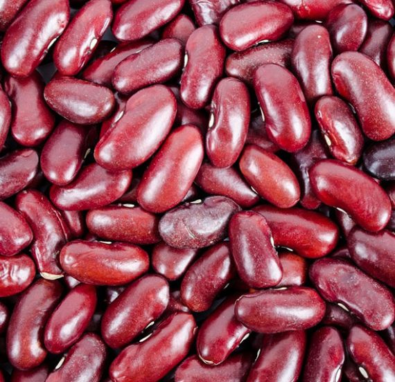 Kidney Beans Suppliers