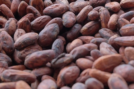 Buy Cocoa Beans Online