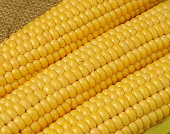 Buy Yellow Corn Online