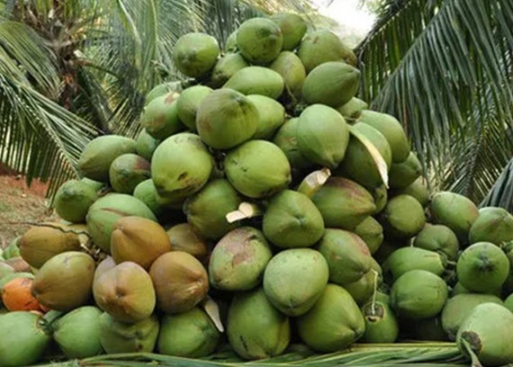 Coconut Suppliers