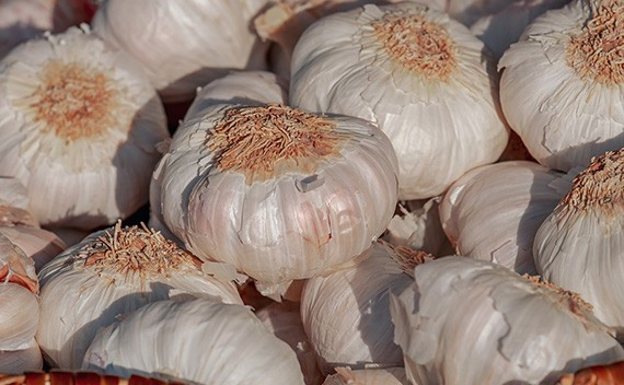 Garlic Exporters and Suppliers