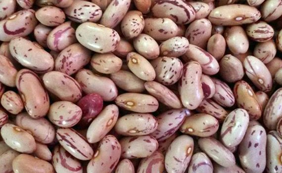 Kidney Beans Suppliers Online