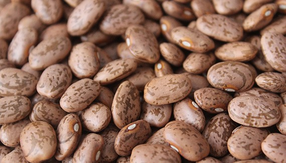 Pinto Beans Suppliers and Exporters